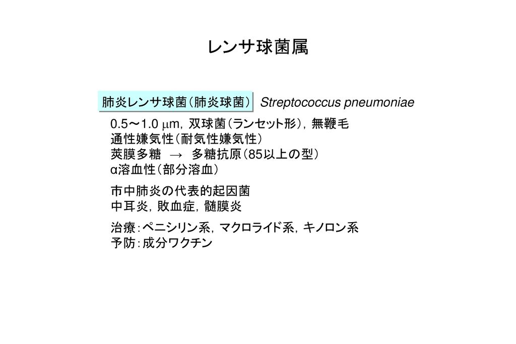 レンサ球菌属 肺炎レンサ球菌(肺炎球菌) Streptococcus pneumoniae