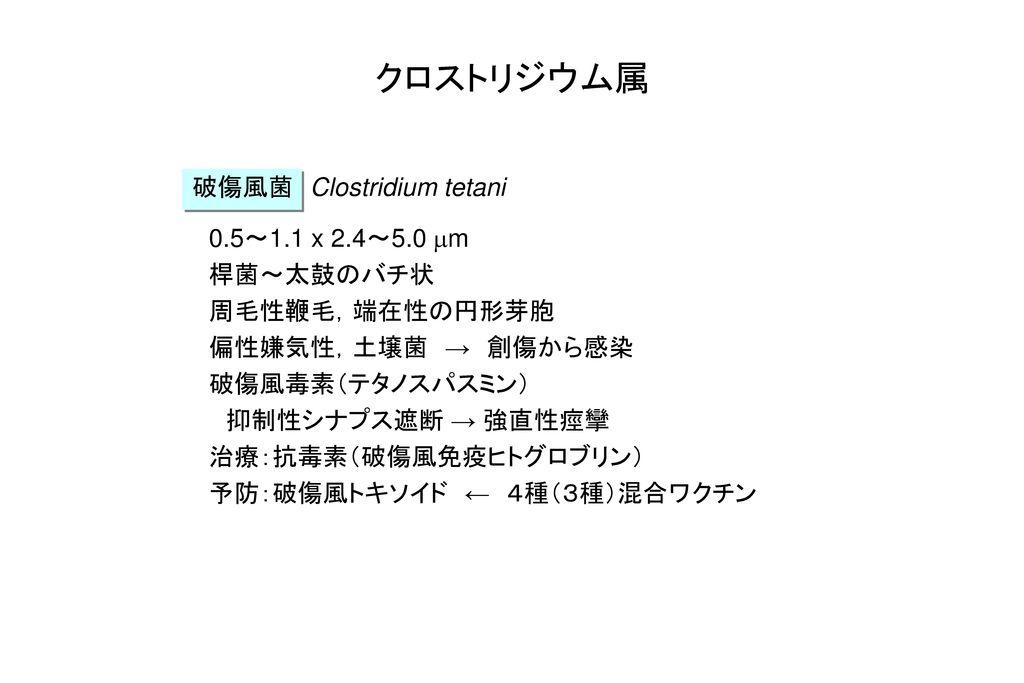 クロストリジウム属 破傷風菌 Clostridium tetani 0.5~1.1 x 2.4~5.0 mm 桿菌~太鼓のバチ状
