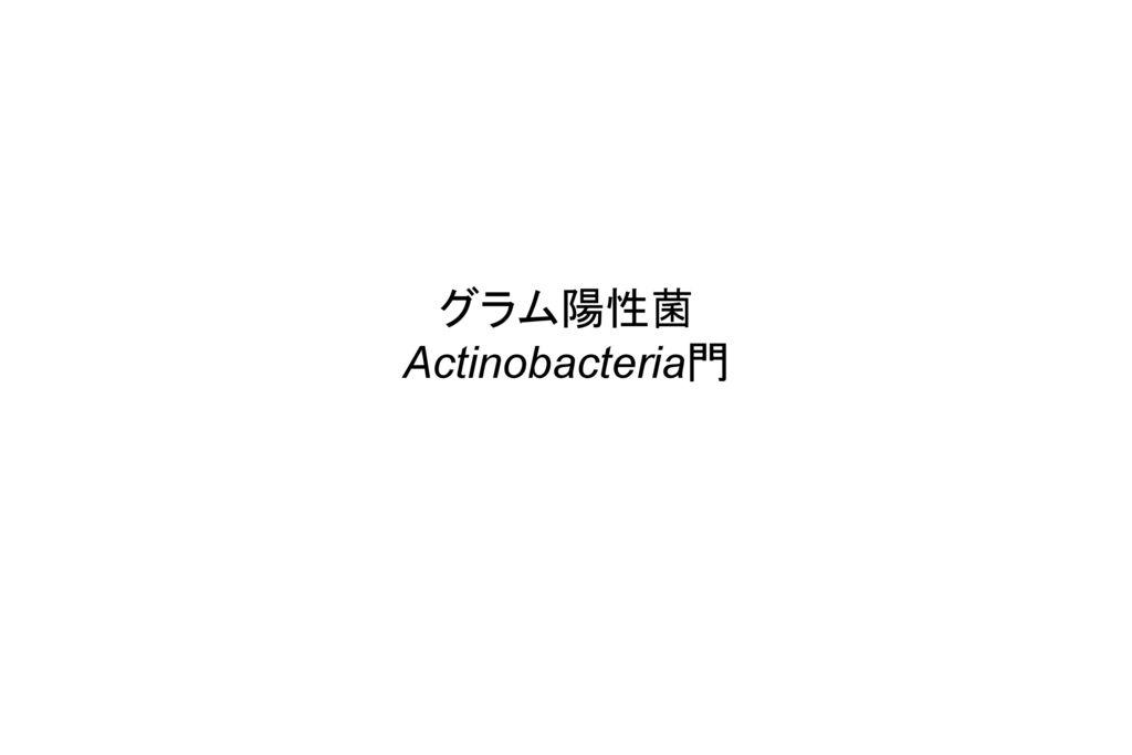 グラム陽性菌 Actinobacteria門