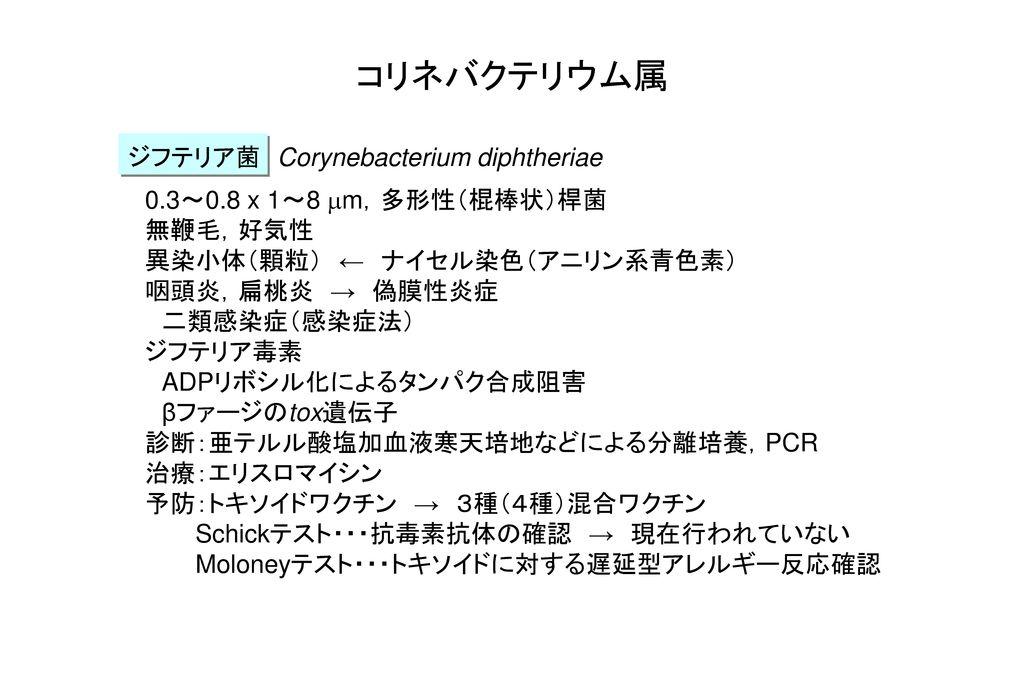 コリネバクテリウム属 ジフテリア菌 Corynebacterium diphtheriae