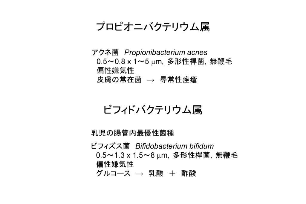 プロピオニバクテリウム属 ビフィドバクテリウム属 アクネ菌 Propionibacterium acnes