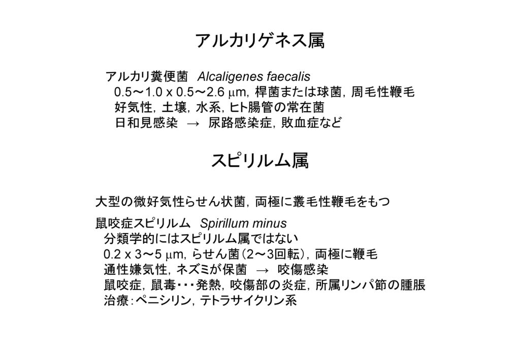 アルカリゲネス属 スピリルム属 アルカリ糞便菌 Alcaligenes faecalis