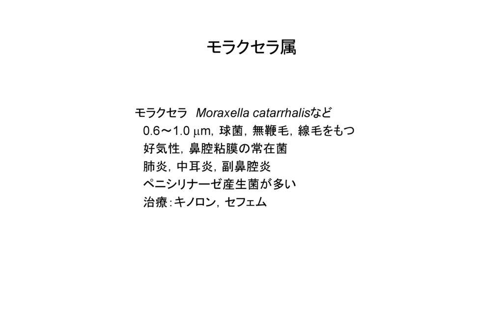 モラクセラ属 モラクセラ Moraxella catarrhalisなど 0.6~1.0 mm,球菌,無鞭毛,線毛をもつ