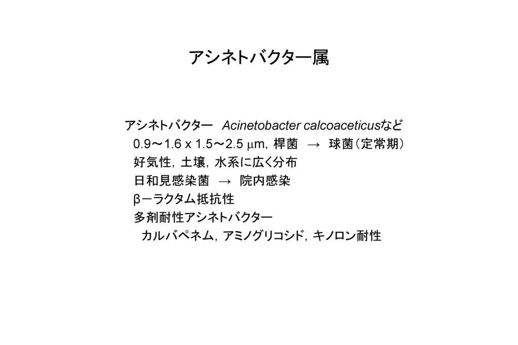 アシネトバクター属 アシネトバクター Acinetobacter calcoaceticusなど