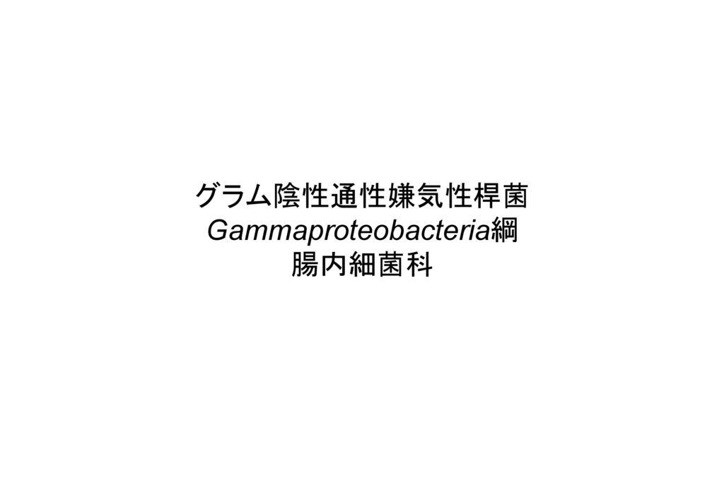 Gammaproteobacteria綱
