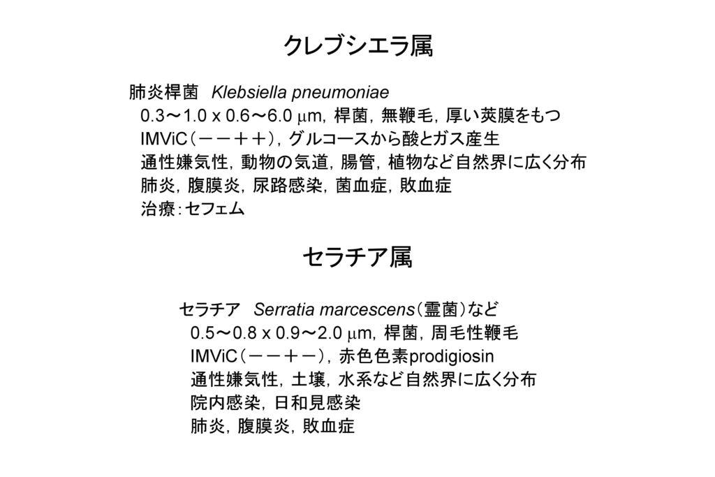 クレブシエラ属 セラチア属 肺炎桿菌 Klebsiella pneumoniae
