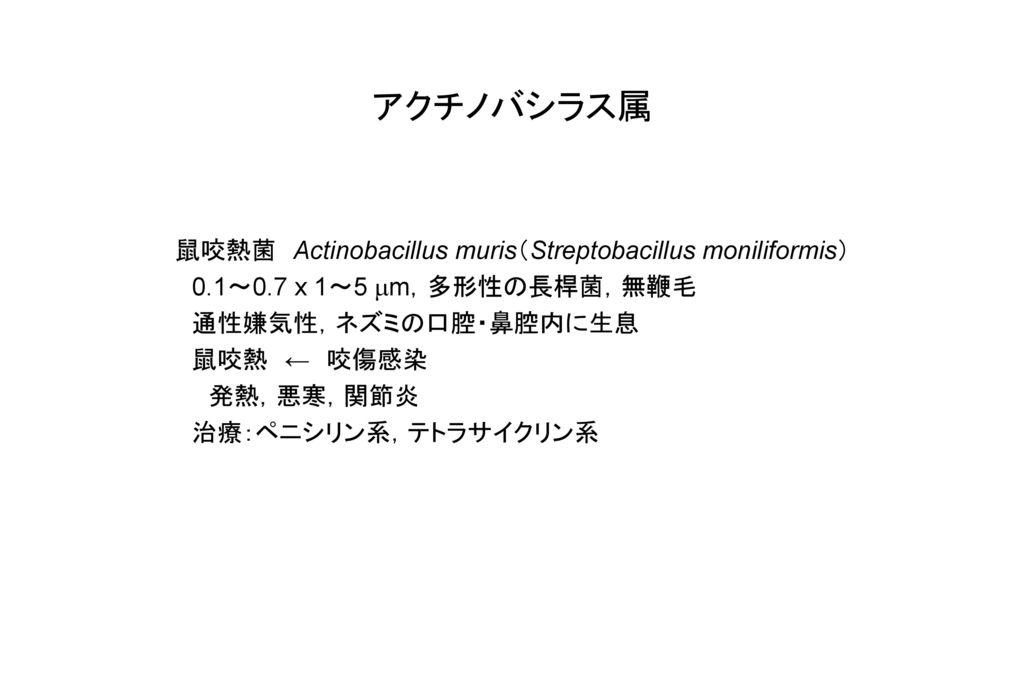 アクチノバシラス属 鼠咬熱菌 Actinobacillus muris(Streptobacillus moniliformis)