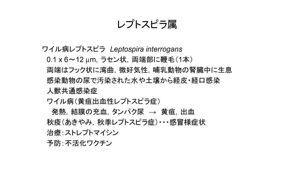 レプトスピラ属 ワイル病レプトスピラ Leptospira interrogans
