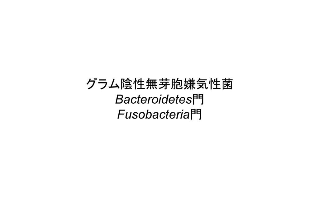 グラム陰性無芽胞嫌気性菌 Bacteroidetes門 Fusobacteria門