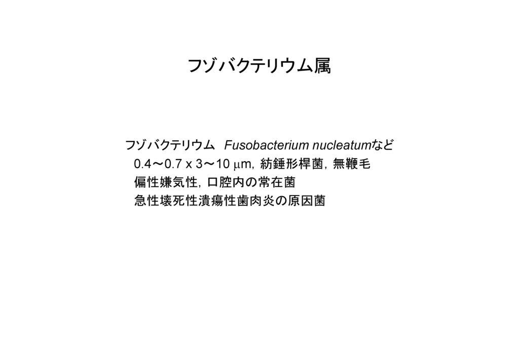 フゾバクテリウム属 フゾバクテリウム Fusobacterium nucleatumなど