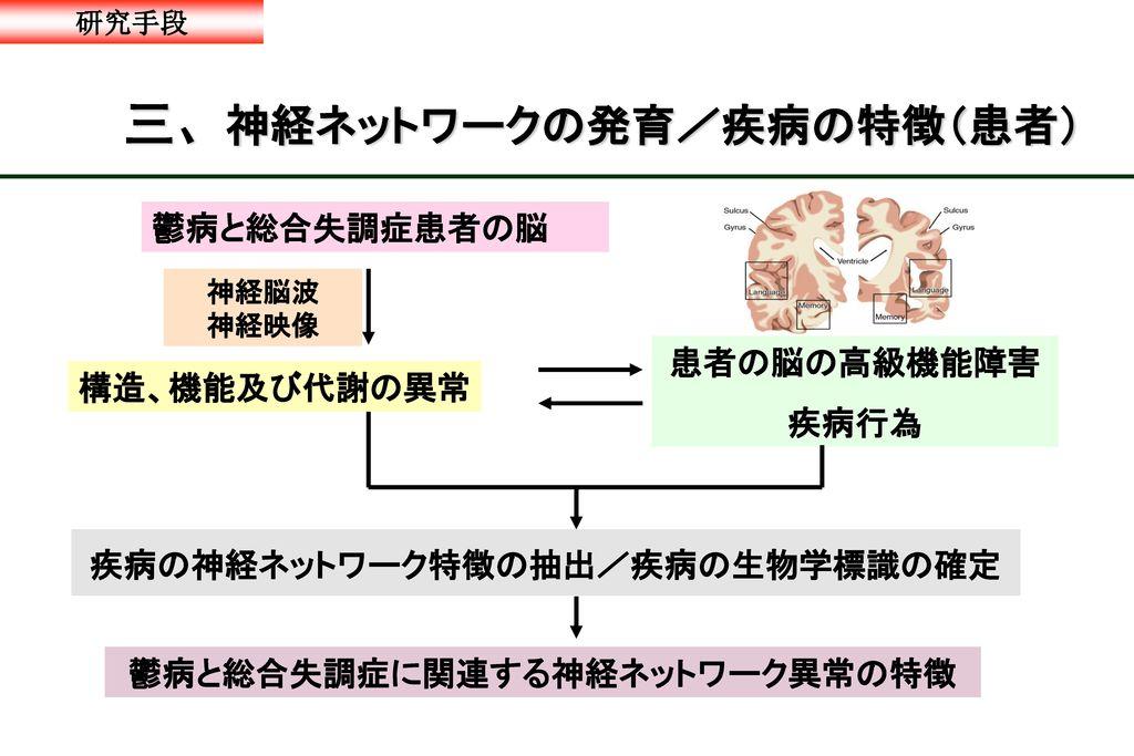 三、神経ネットワークの発育/疾病の特徴(患者)