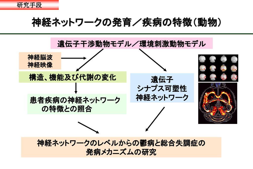 神経ネットワークの発育/疾病の特徴(動物)