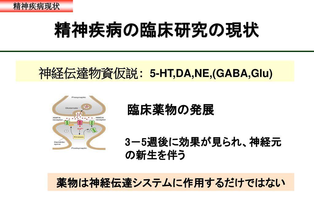 神経伝達物資仮説: 5-HT,DA,NE,(GABA,Glu)