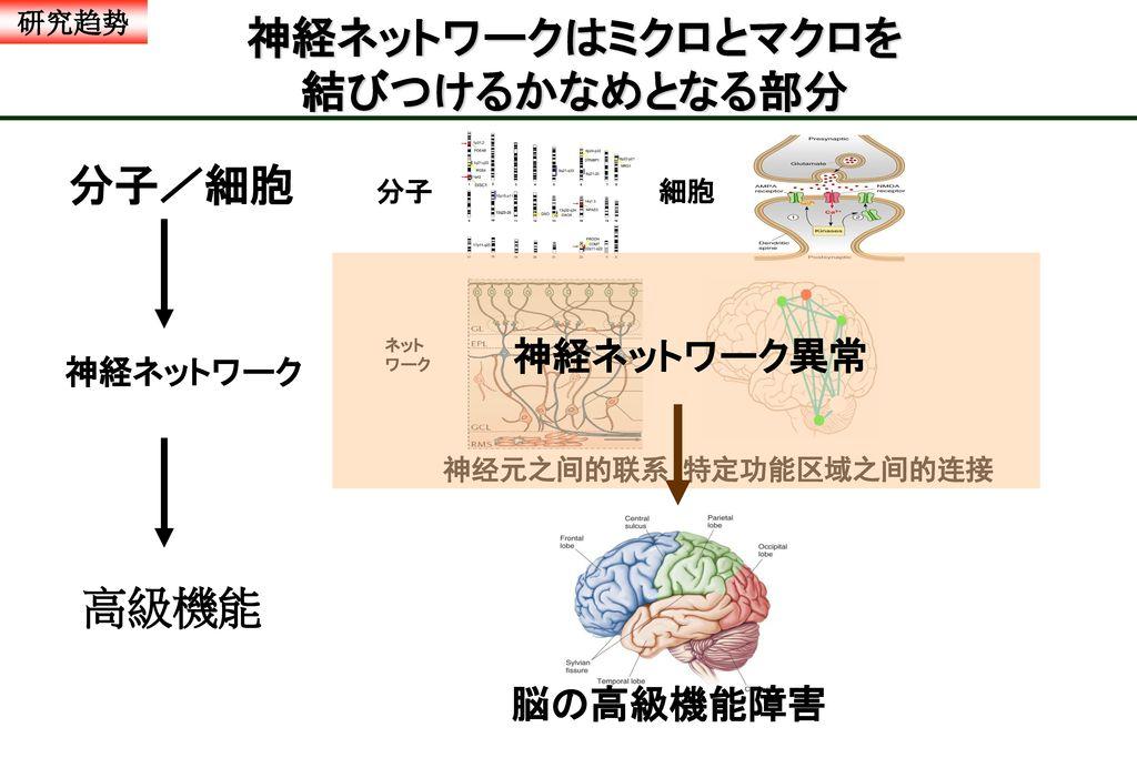 神経ネットワークはミクロとマクロを 結びつけるかなめとなる部分
