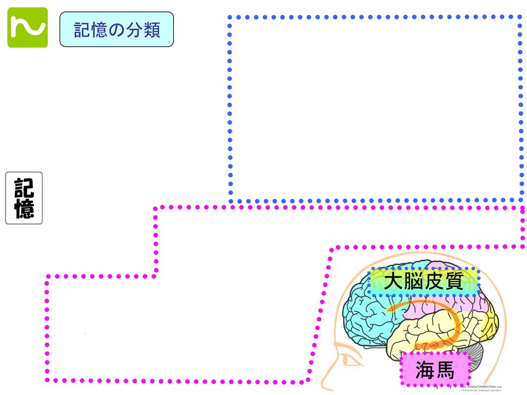 記憶の分類 大脳皮質 海馬