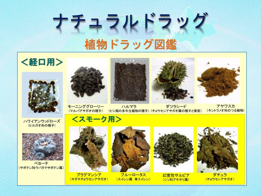 ナチュラルドラッグ 植物ドラッグ図鑑 <経口用> <スモーク用>