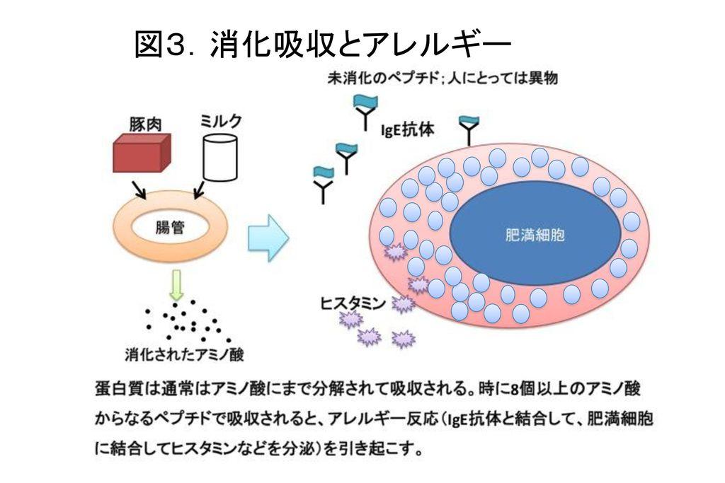 図3.消化吸収とアレルギー