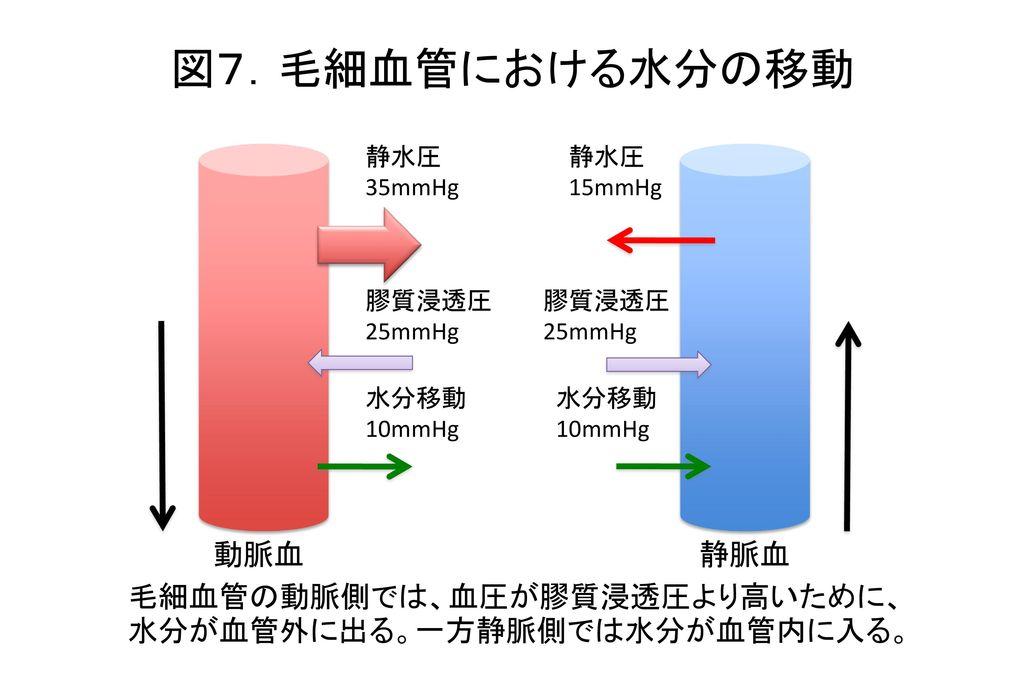図7.毛細血管における水分の移動 動脈血 静脈血