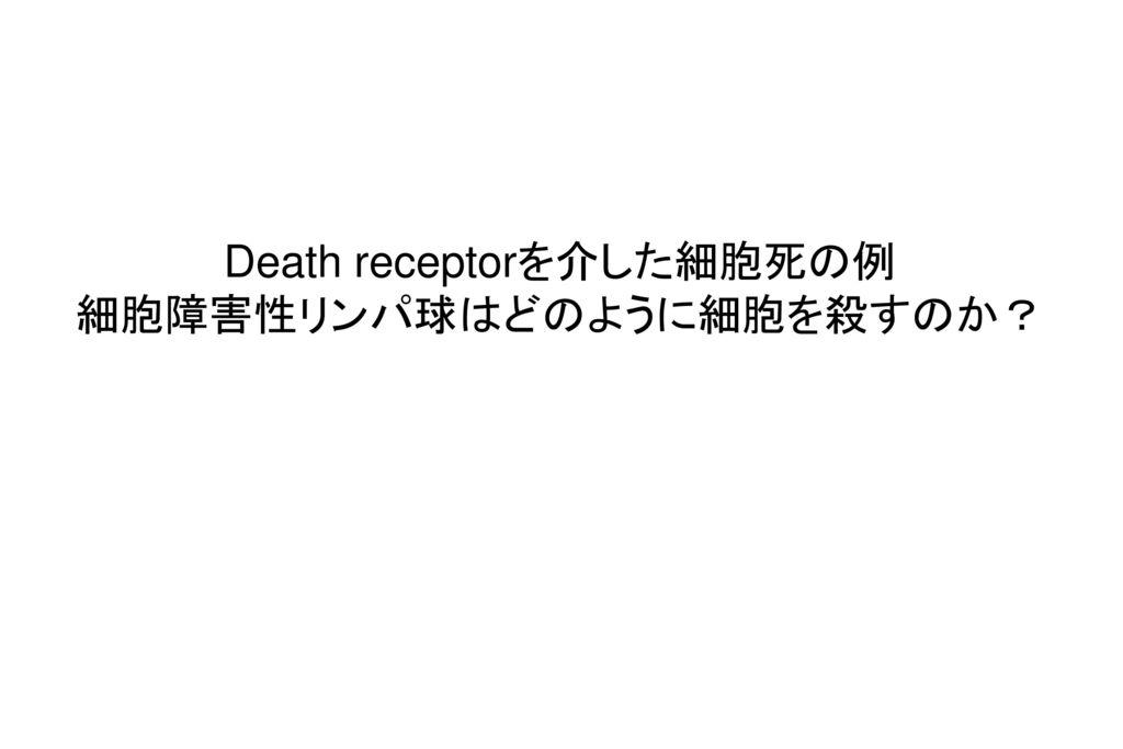 Death receptorを介した細胞死の例 細胞障害性リンパ球はどのように細胞を殺すのか?
