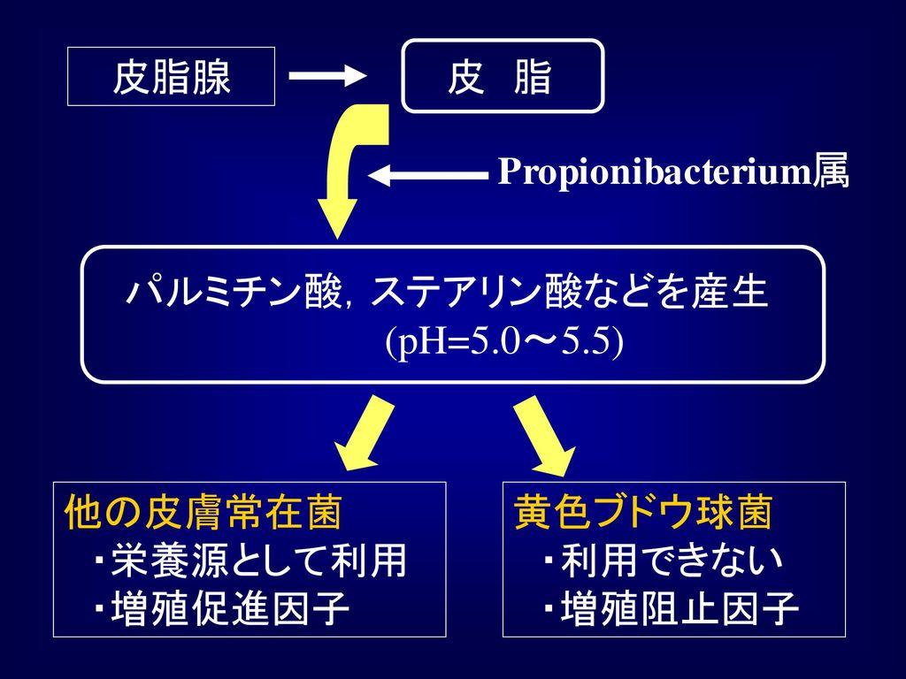 皮 脂 皮脂腺. Propionibacterium属. パルミチン酸,ステアリン酸などを産生 (pH=5.0~5.5) 他の皮膚常在菌 ・栄養源として利用 ・増殖促進因子.