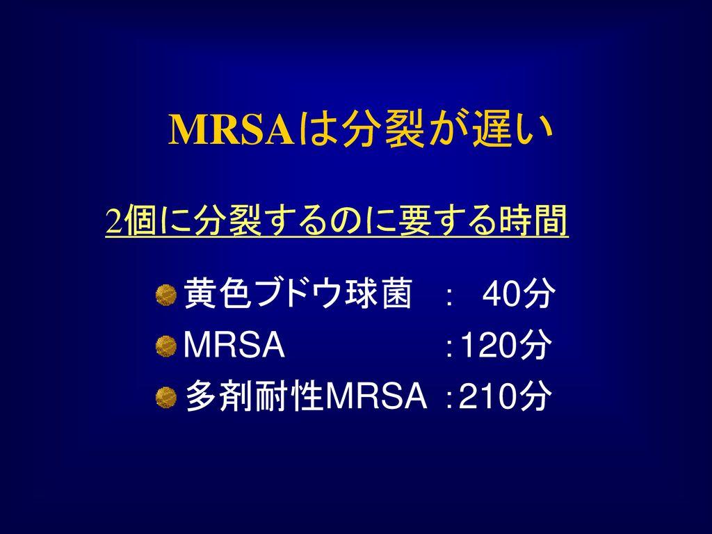 MRSAは分裂が遅い 2個に分裂するのに要する時間 黄色ブドウ球菌 : 40分 MRSA :120分 多剤耐性MRSA :210分
