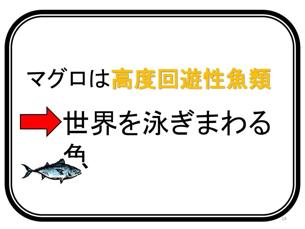 マグロは高度回遊性魚類 世界を泳ぎまわる魚