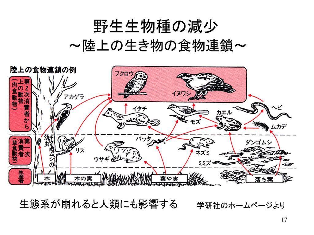 野生生物種の減少 ~陸上の生き物の食物連鎖~