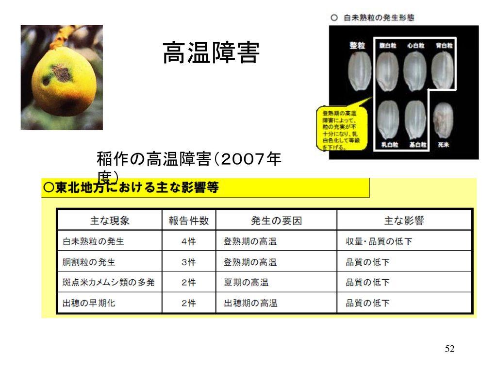 高温障害 稲作の高温障害(2007年度)