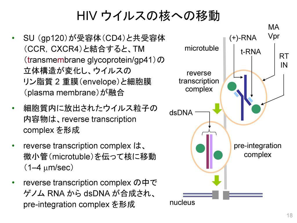 HIV ウイルスの核への移動 MA. Vpr.