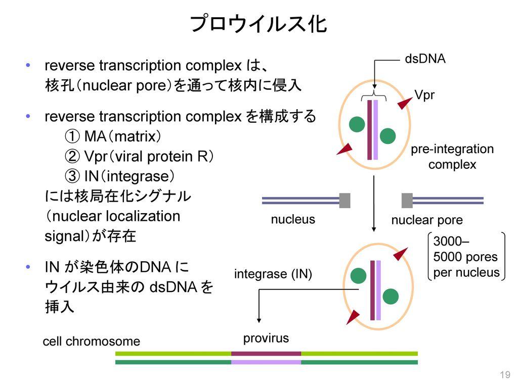 pre-integration complex