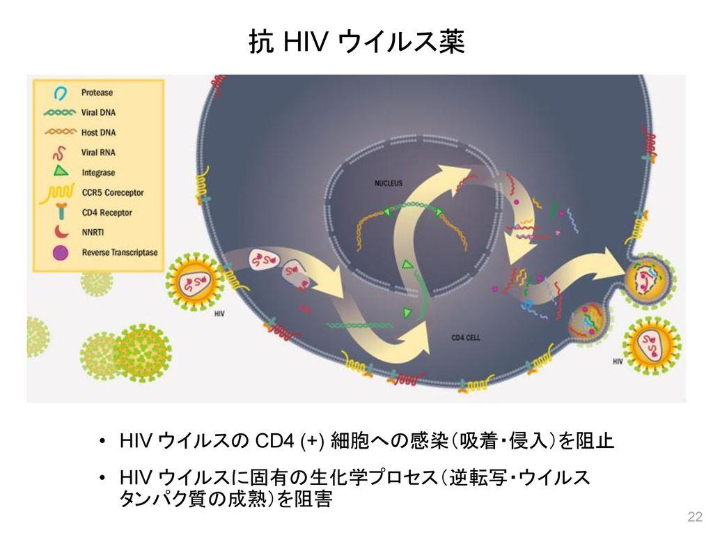 抗 HIV ウイルス薬 HIV ウイルスの CD4 (+) 細胞への感染(吸着・侵入)を阻止