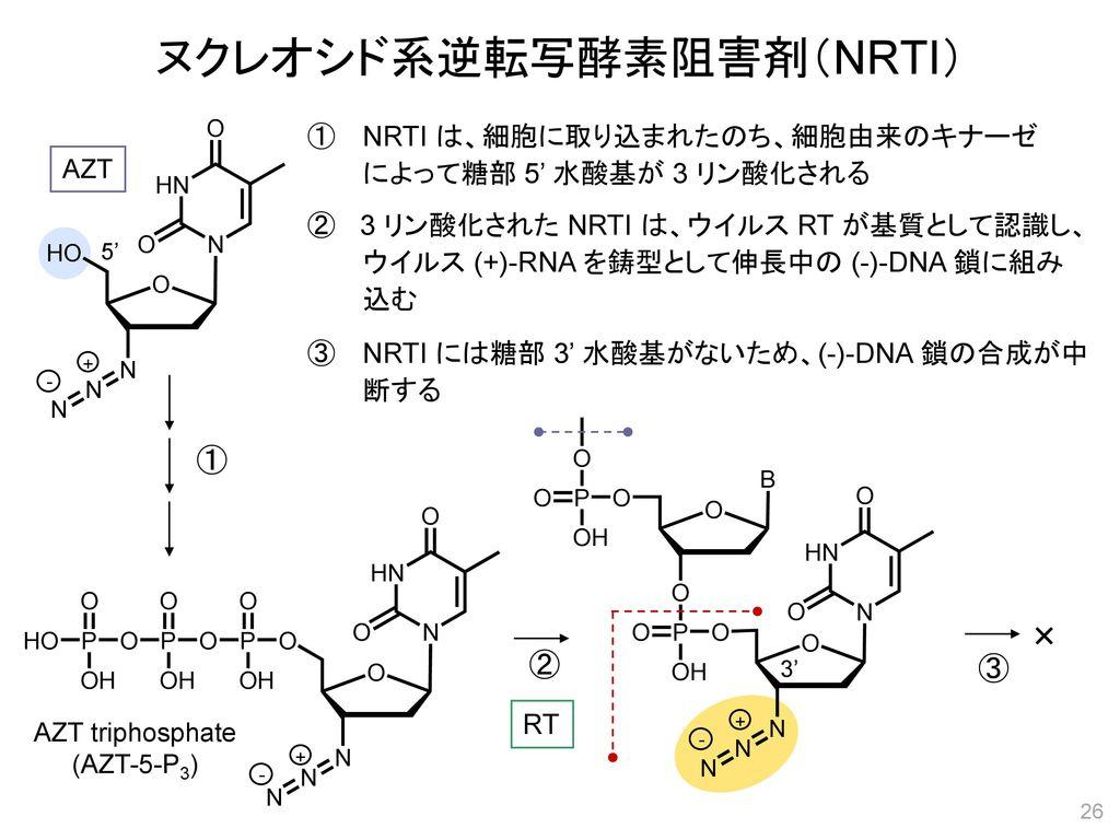 ヌクレオシド系逆転写酵素阻害剤(NRTI)
