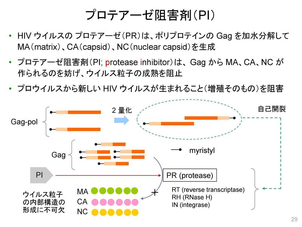プロテアーゼ阻害剤(PI) HIV ウイルスの プロテアーゼ(PR)は、ポリプロテインの Gag を加水分解して MA(matrix)、CA(capsid)、NC(nuclear capsid)を生成