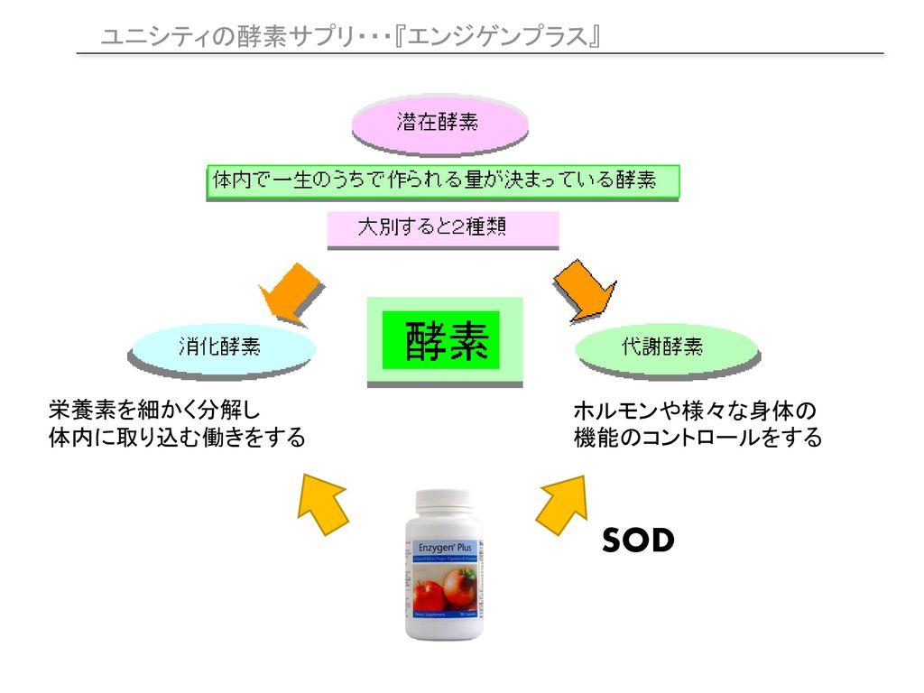 SOD ユニシティの酵素サプリ・・・『エンジゲンプラス』 栄養素を細かく分解し 体内に取り込む働きをする