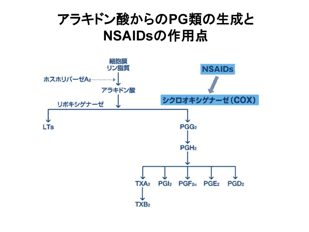 アラキドン酸からのPG類の生成とNSAIDsの作用点