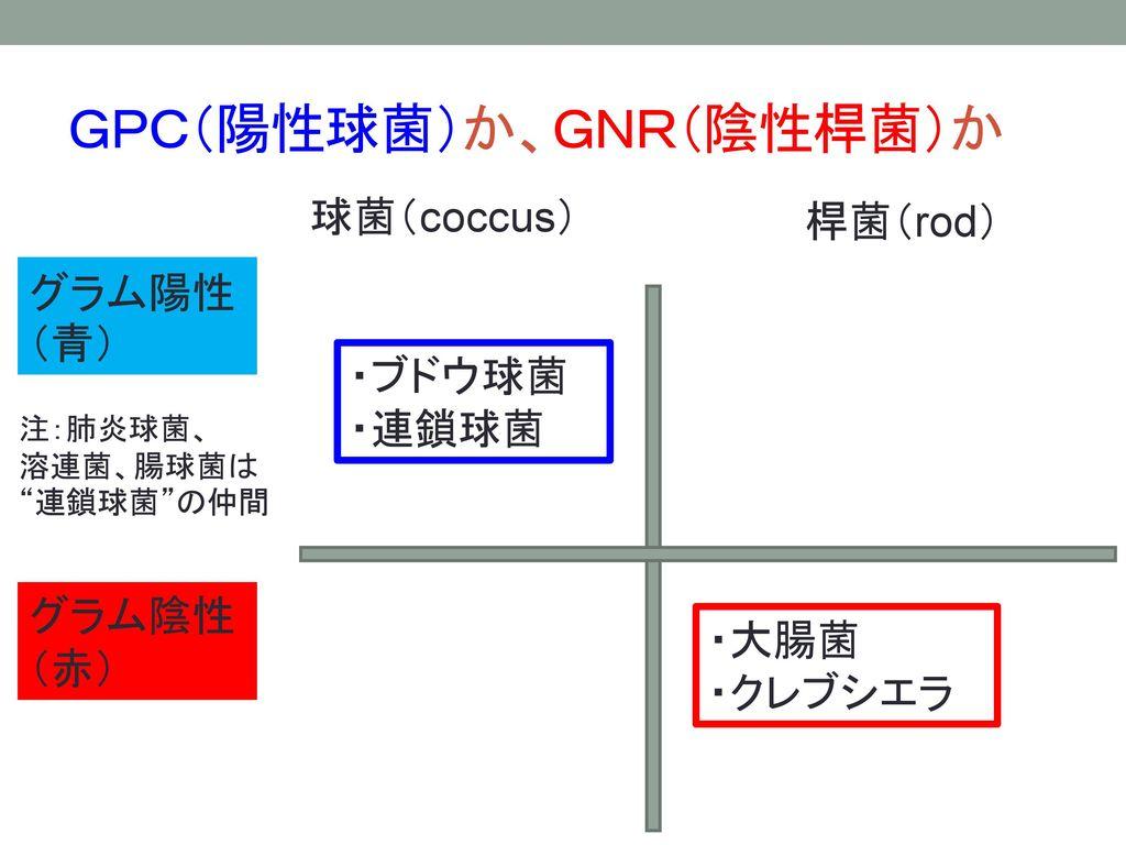 GPC(陽性球菌)か、GNR(陰性桿菌)か