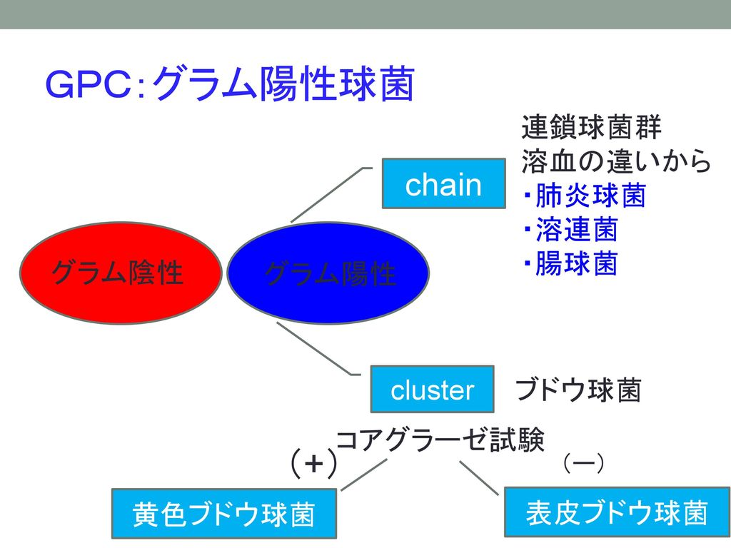 GPC:グラム陽性球菌 (+) chain 連鎖球菌群 溶血の違いから ・肺炎球菌 ・溶連菌 ・腸球菌 グラム陰性 グラム陽性