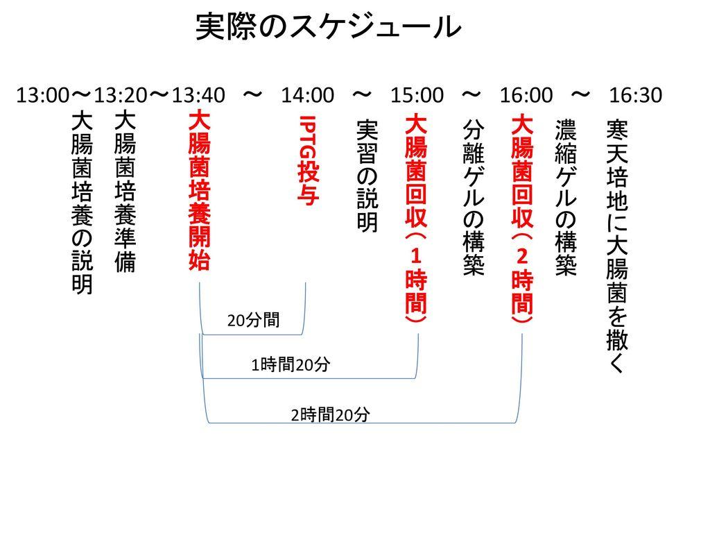 実際のスケジュール 13:00~13:20~13:40 ~ 14:00 ~ 15:00 ~ 16:00 ~ 16:30 大腸菌培養の説明