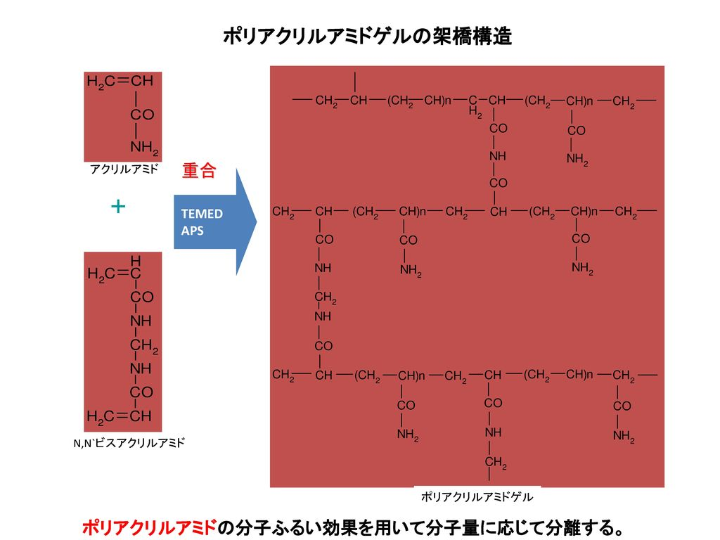 ポリアクリルアミドの分子ふるい効果を用いて分子量に応じて分離する。