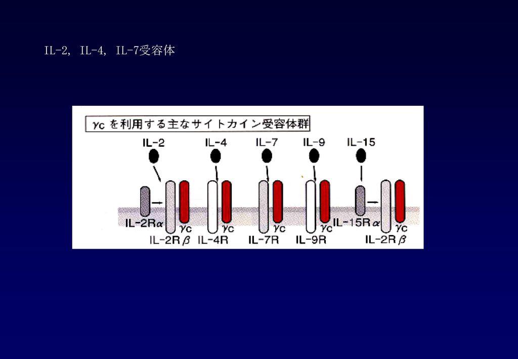 IL-2, IL-4, IL-7受容体