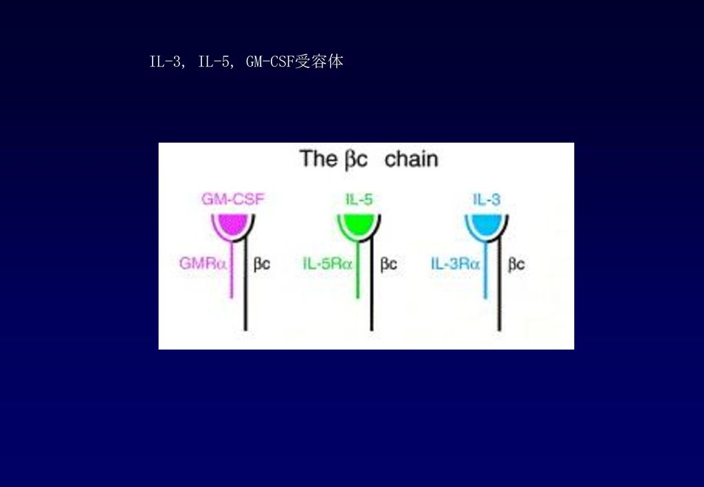IL-3, IL-5, GM-CSF受容体