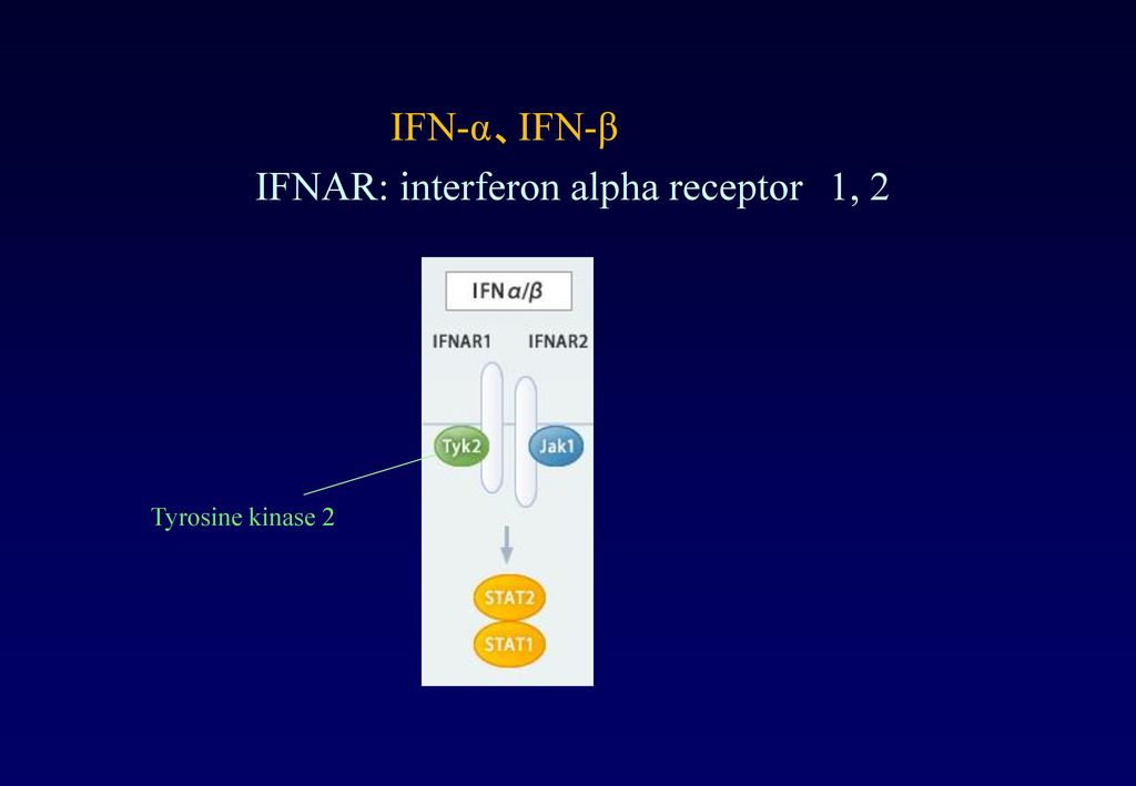 IFNAR: interferon alpha receptor 1, 2