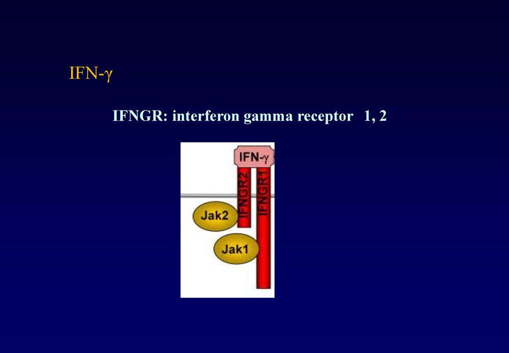 IFN-γ IFNGR: interferon gamma receptor 1, 2