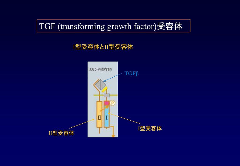 TGF (transforming growth factor)受容体