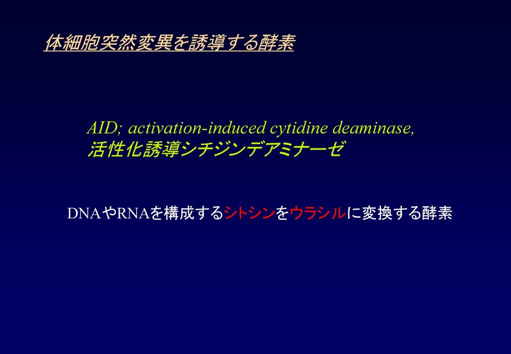 AID; activation-induced cytidine deaminase, 活性化誘導シチジンデアミナーゼ