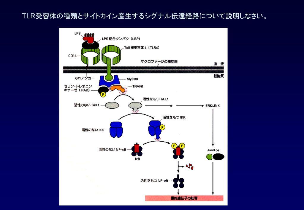 TLR受容体の種類とサイトカイン産生するシグナル伝達経路について説明しなさい。