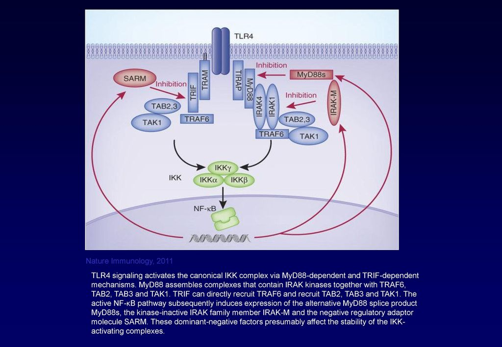 Nature Immunology, 2011