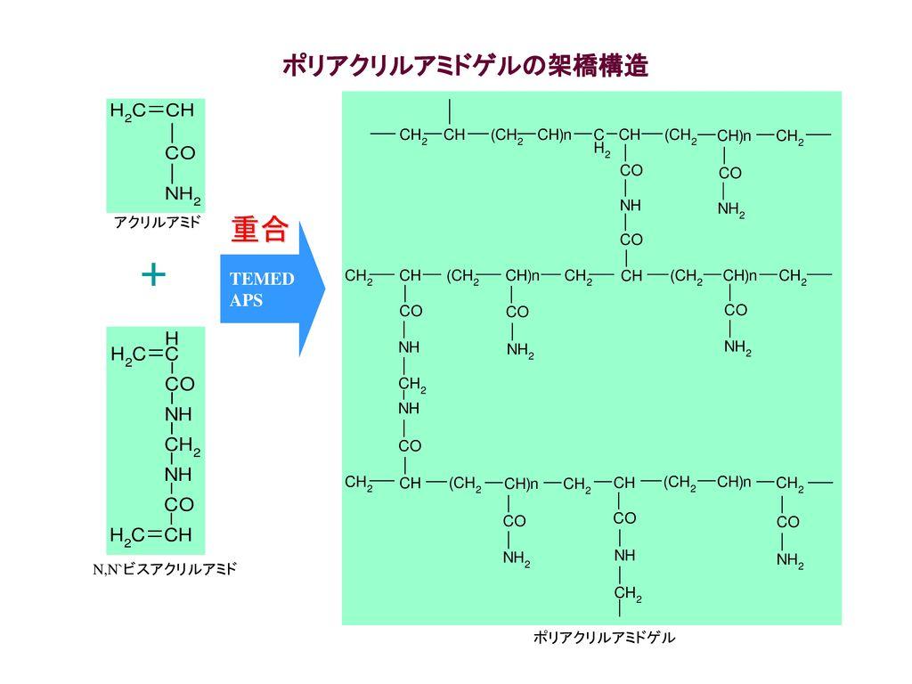 重合 + ポリアクリルアミドゲルの架橋構造 TEMED APS アクリルアミド N,N`ビスアクリルアミド ポリアクリルアミドゲル