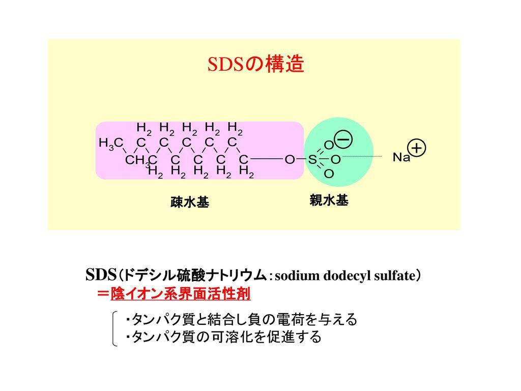 SDSの構造 SDS(ドデシル硫酸ナトリウム:sodium dodecyl sulfate) =陰イオン系界面活性剤