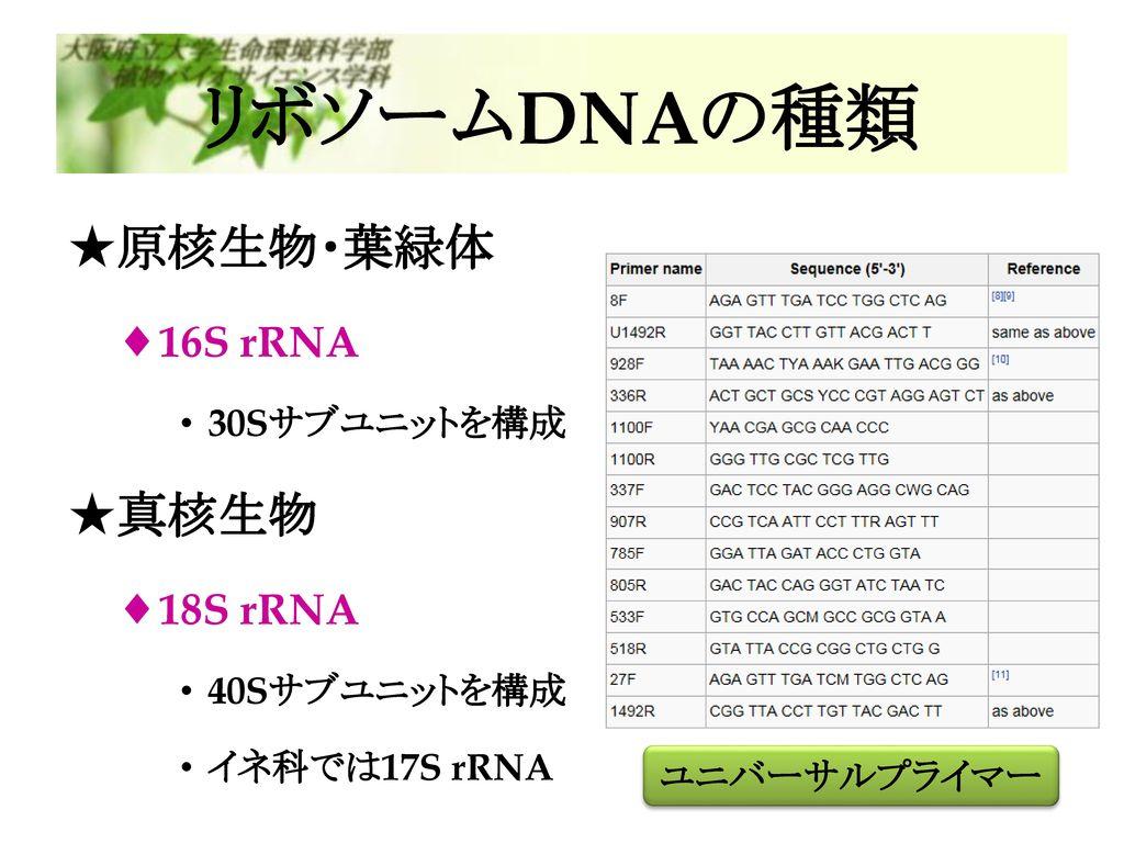 リボソームDNAの種類 原核生物・葉緑体 真核生物 16S rRNA 18S rRNA 30Sサブユニットを構成 40Sサブユニットを構成